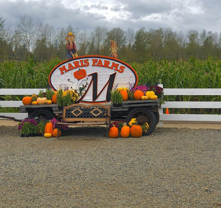 A+bench+at+Maris+Farms.